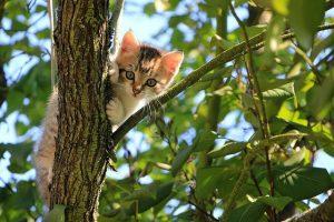 Begini Penjelasan Tentang Kucing Kampung Selengkapnya