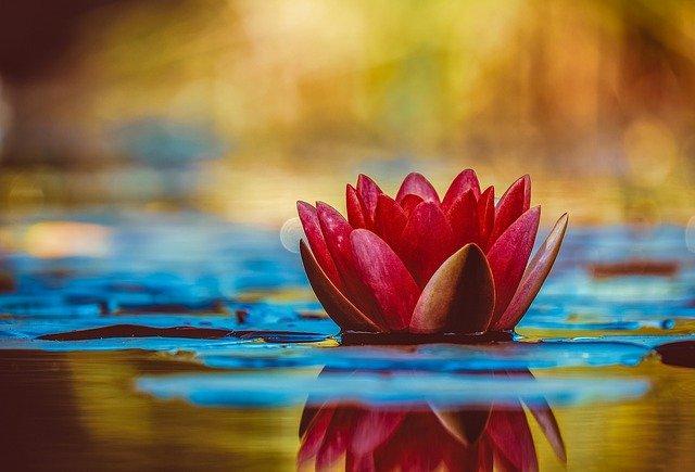 Arti Bunga Tulip dan Manfaatnya Untuk Kesehatan Tubuh